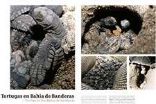 Turtles in the Bahía de Banderas - Eduardo Lugo