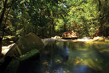 Daintree Rainforest, Australia - AMURA