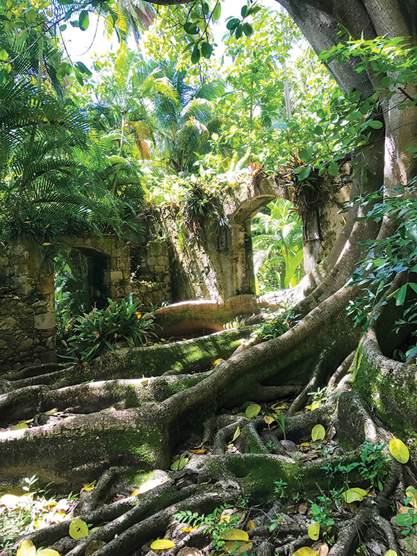 The Balenbouche Plantation possesses significant natural, archeological and historical treasures.