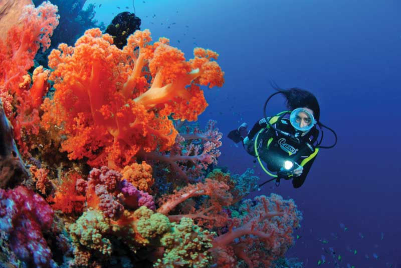 When diving near a coral reef you must remember that it is a living organism, very fragile, and avoid touching it. In fiyi there are around 400 coral species.