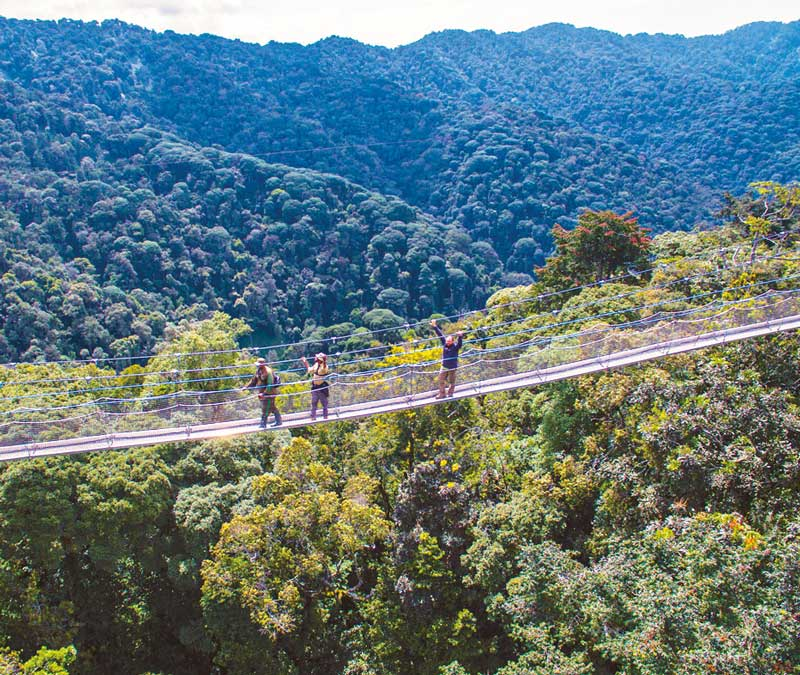 Amura, AmuraWorld,Rwanda,Ruanda,Compás Internacional,International Compass , Suspension bridge in Nyungwe forest.