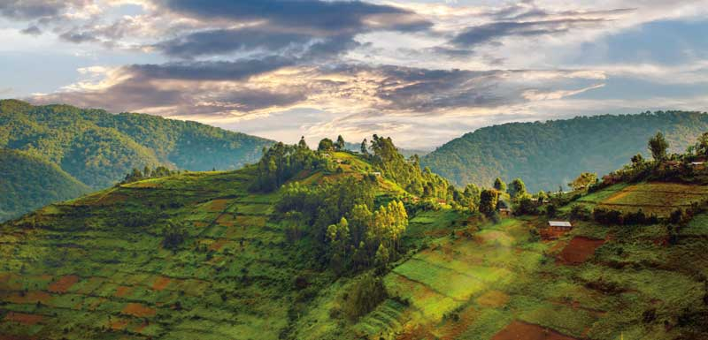 Amura, AmuraWorld,Rwanda,Ruanda,Compás Internacional,International Compass , 83% of the country's inhabitants live in rural areas.